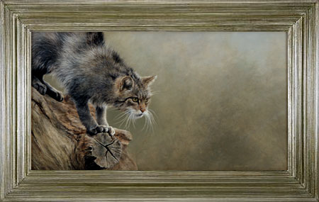 SCOTTISH WILDCAT | 