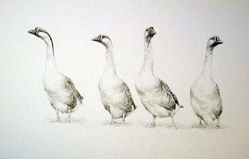 © C CHEYNE 2008 'The Welcoming Committee'