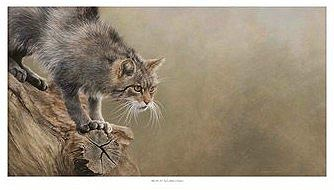 WILDCAT Limited Edition Prints ©C Cheyne 2006